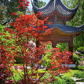 Lynn Bauer - Red Maple and Pagoda in the Chinese Garden