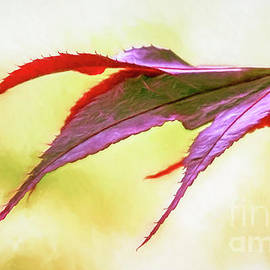 Jean OKeeffe Macro Abundance Art - Red Maple Leaf