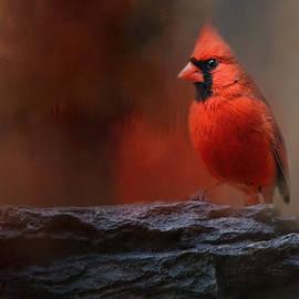 Jai Johnson - Red On The Rocks - Cardinal Bird Art