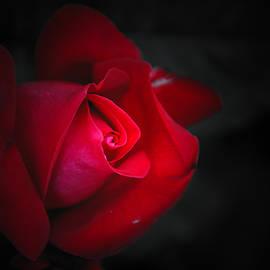Damijana Cermelj - Red red