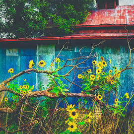 Anna Louise - Red Roof Tin Barn and Wild Sunflowers