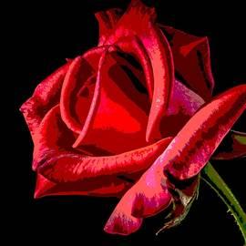 Jean Francois Gil - Red  Rose 1