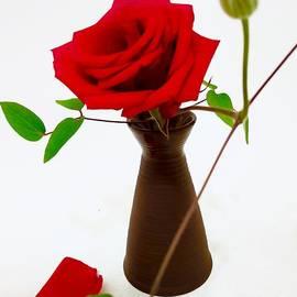 Mioara Andritoiu - Red Rose