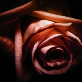Nicklas Gustafsson - Red rose