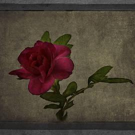 Robert Murray - Red Rose