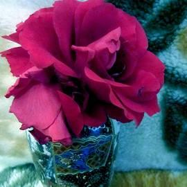 Romuald  Henry Wasielewski - Red Rose