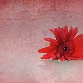Elvira Pinkhas - Red Scent