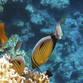 Red Sea Magical World