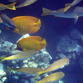 Red Sea fish world