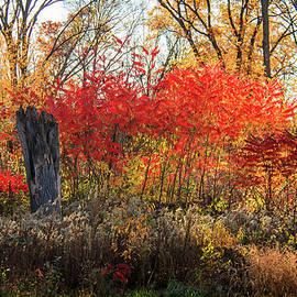 Joni Eskridge - Red Splash of Fall Color