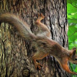 Sergey Lukashin - Red squirrel small