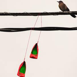 Robin Zygelman - Red Stilettos With Bird