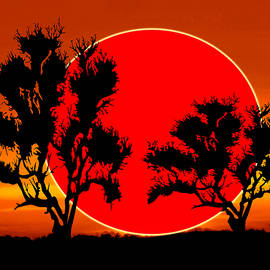 Kathy Franklin - Red Sun