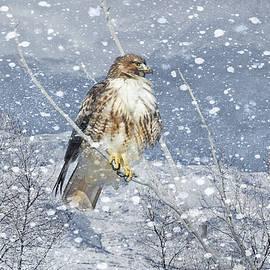 Jennie Marie Schell - Red Tail Hawk Winter
