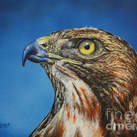 Bob Williams - Red-Tailed Hawk......Honor