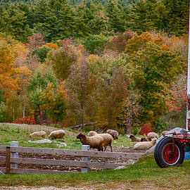 Jeff Folger - Red tractor and sheep in fall foliage