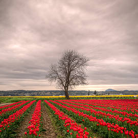 Spencer McDonald - Red Tulips and a Tree