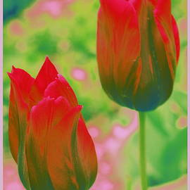 Photographic Art and Design by Dora Sofia Caputo - Red Tulips Pop Art