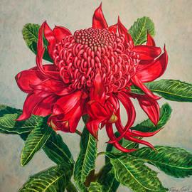 Fiona Craig - Red Waratah Beauty