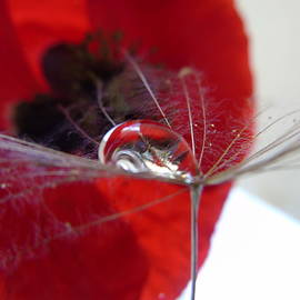 Barbara St Jean - Red White Grey