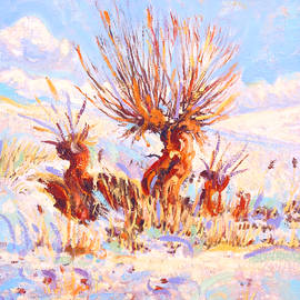 Dusan Balara - Red Willows