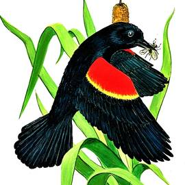 Bob Patterson - Red Wing Black Bird