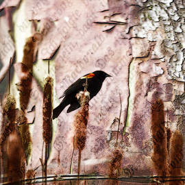 Marie Jamieson - Red Winged Black Bird On A Cattail - Meadow - Marsh