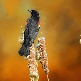 Suzanne Handel - Red Winged Blackbird