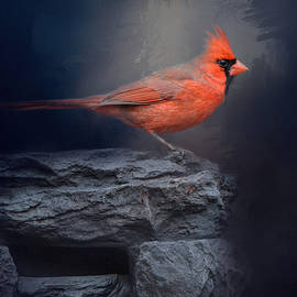 Jai Johnson - Redbird On The Rocks