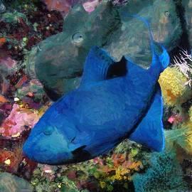 Sergey Lukashin - Redtooth Triggerfish