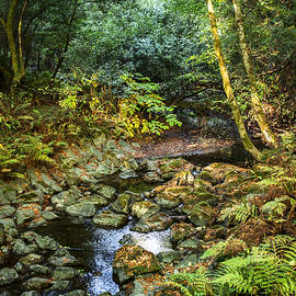 Brian Tada - Redwood Creek Autumn at Muir Woods