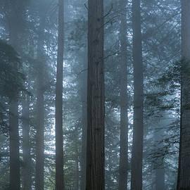 Steve Gadomski - Redwood Mist