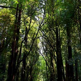 Michele Avanti - Redwood Reflection
