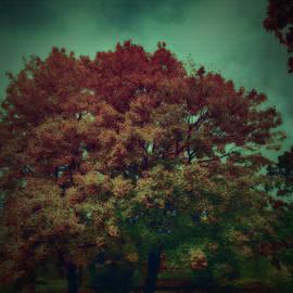 Ramon Martinez - Reed tree