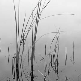 Bill Chambers - Reeds