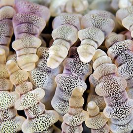 Henry Jager - Reef-Art - Corals