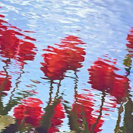 Tom Vaughan - Reflected Tulips
