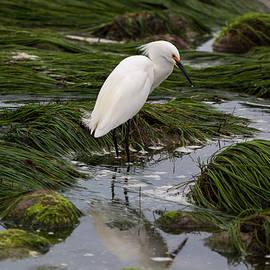 John Daly - Reflecting at the Tide Pool