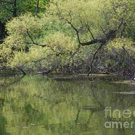 Ann Horn - Reflecting Spring Green