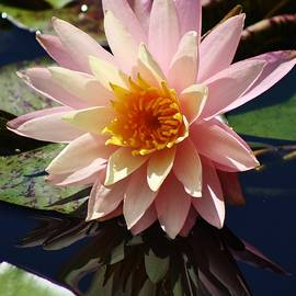 Bruce Bley - Reflecting Water Lily