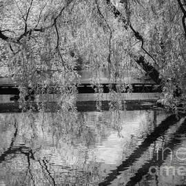 Olga Photography - Reflection BW