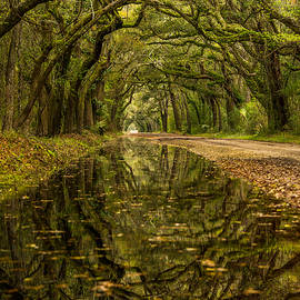 Serge Skiba - Reflection of Live Oaks