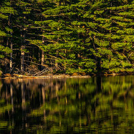 Karol  Livote - Reflection Of The Pines