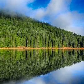 Lynn Hopwood - Reflections in green