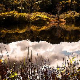Karen Regan - Reflections in Pilgrim Pond