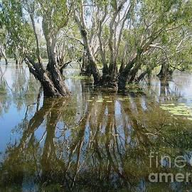 Jackie Tweddle - Reflections in Yellow Water Billabong Kakadu