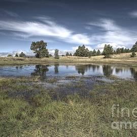 Thomas Todd - Reflections of Hart- Prairie Trail