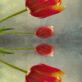 Debbie Nobile - Reflections of Tulips