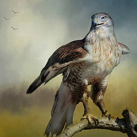 Barbara Manis - Regal Bird