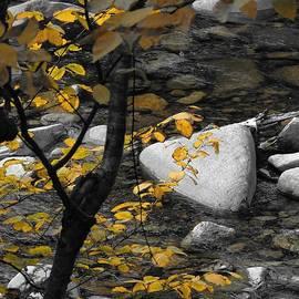 Marcia Lee Jones - Relaxing By A Babbling Brook
